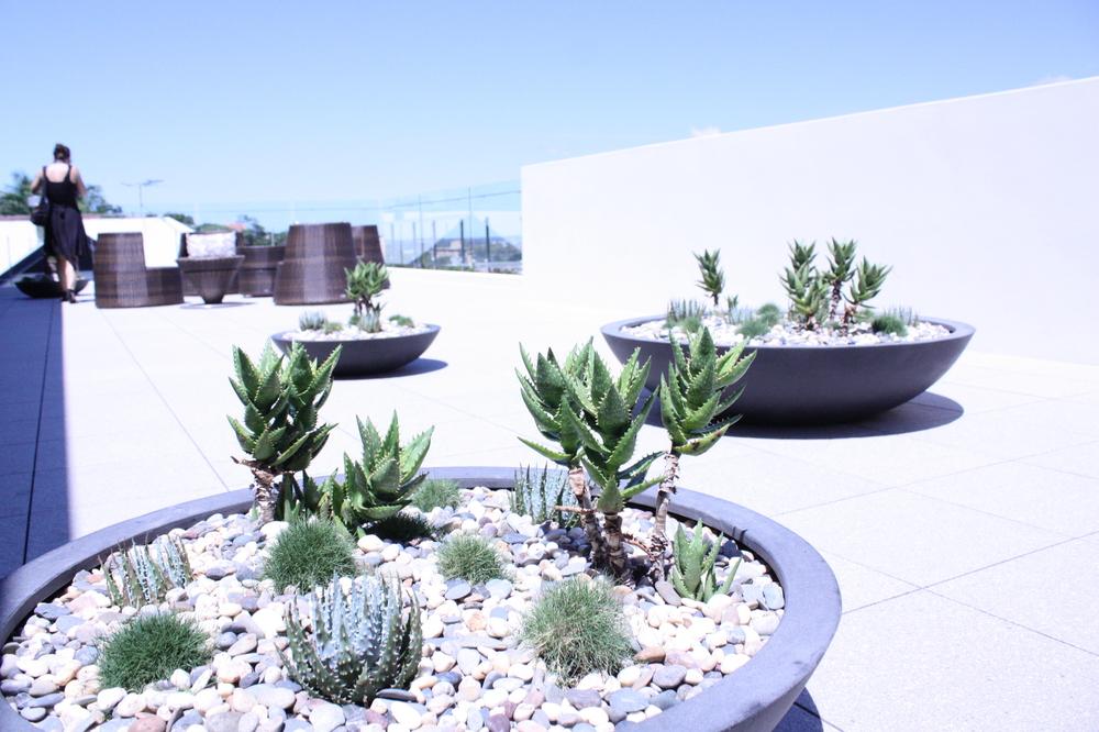 hamilton-rooftop-landscape-design-SEED5.JPG