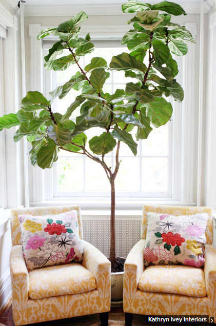 Tall Indoor Plants. Liven Up A Corner Nook Of Your House With An ...