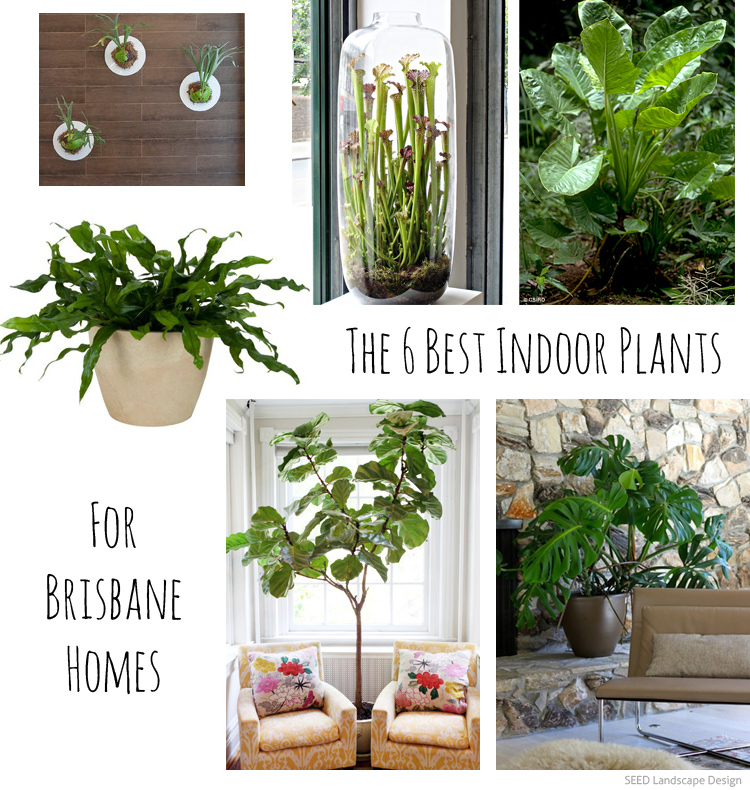 The 6 best indoor plants for brisbane homes seed landscape design - Best plants for indoor ...