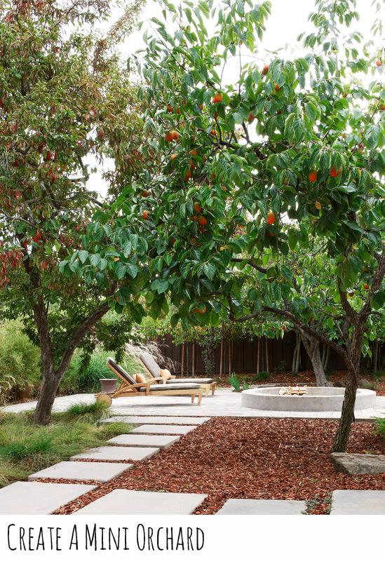 create-mini-orchard.jpg