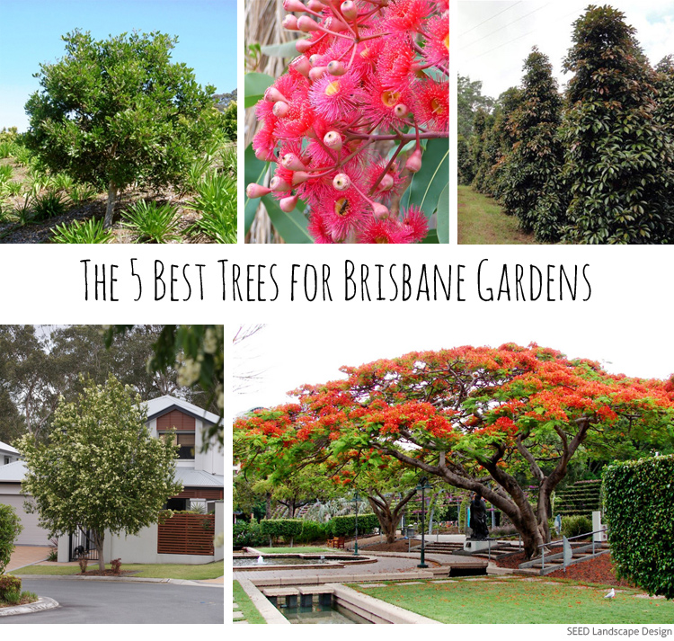 The 5 best trees for brisbane gardens seed landscape design for Garden designs brisbane