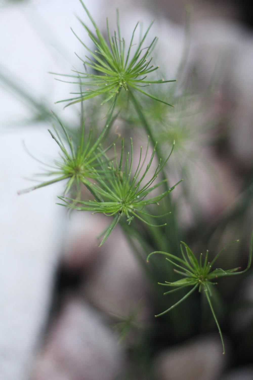 bardon-plantings-seed-lands.jpg
