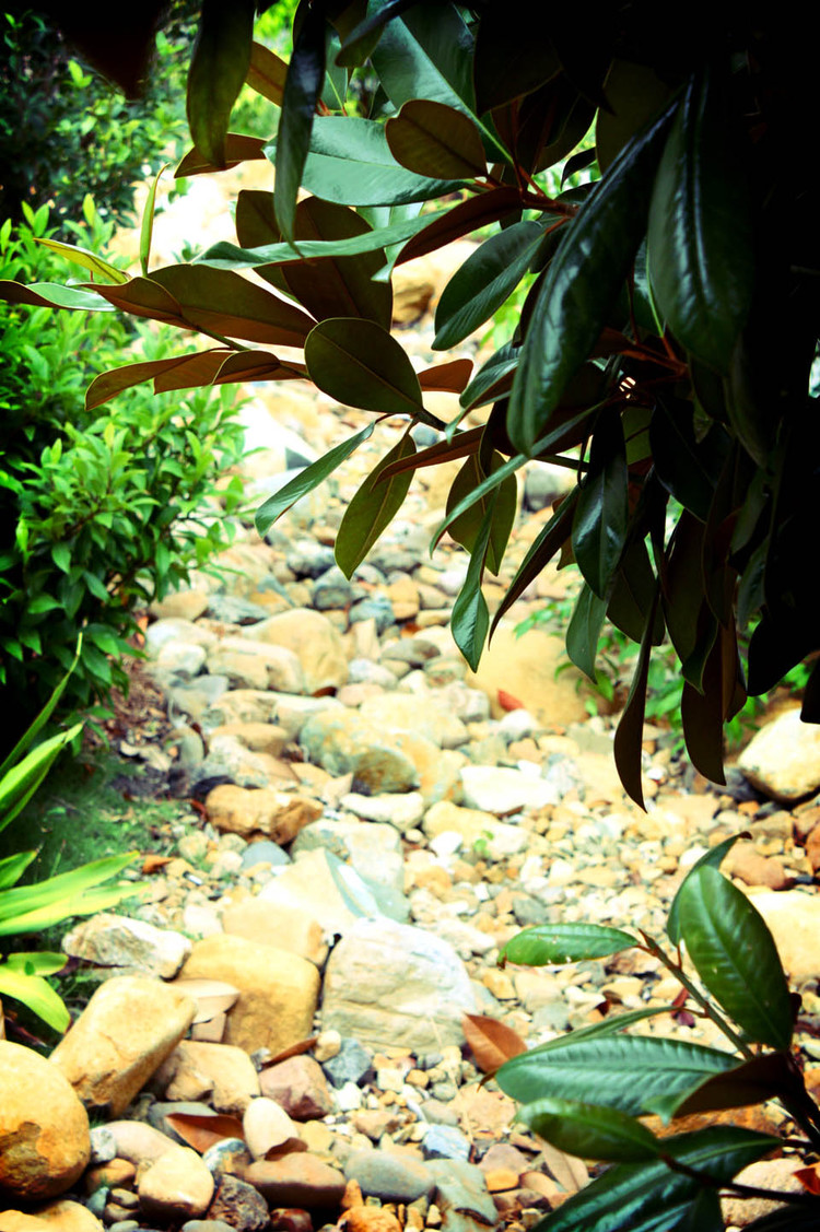 Indooroopilly, QLD Water overflow management and landscape planting. Read more...
