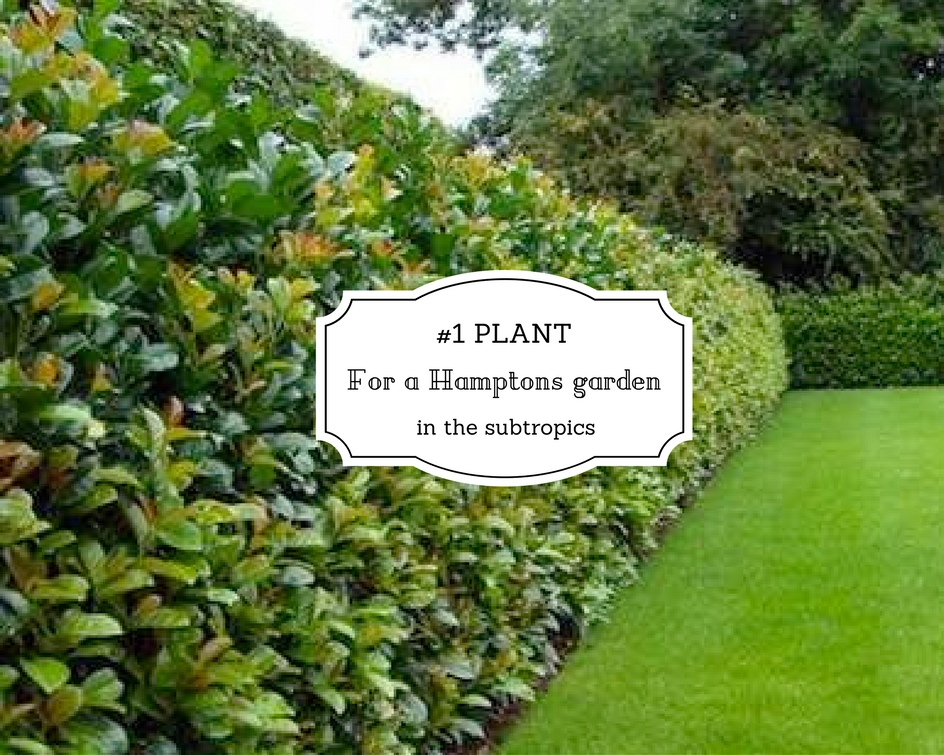 1 Plant For A Hamptons Garden In The Subtropics Seed Landscape Design