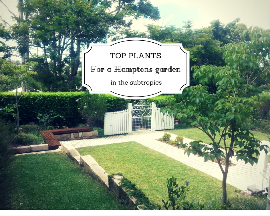 Best plants for a hamptons garden in brisbane seed for Landscape gardeners brisbane