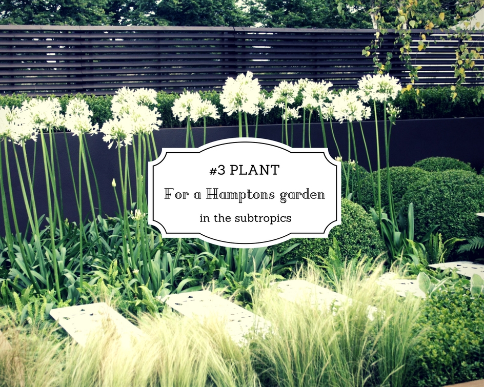 3 Plant For The Hamptons Garden In The Subtropics Seed Landscape