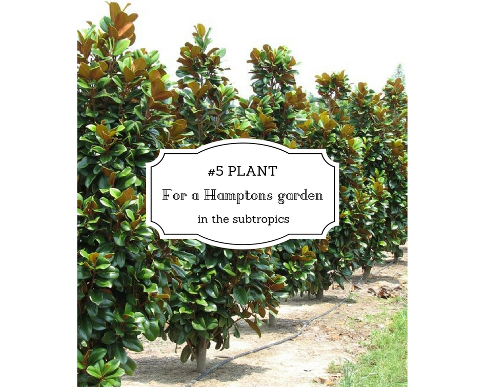 5 Plant For A Hamptons Garden In The Subtropics Seed Landscape