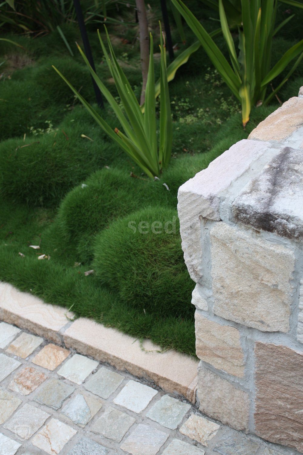 Zoyzia Grass (aka Korean grass) is a lush alternative for a low level plant that retains a manicured look.