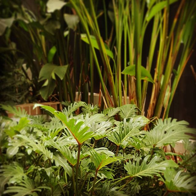 Lush planting to boundary #seedlandscapedesign #brisbanesubtropicalplanting #gardenisajungle