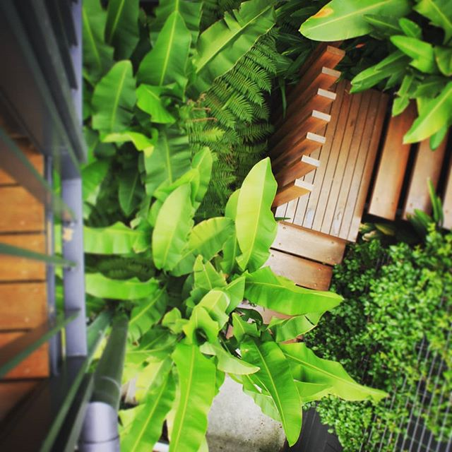 Stairs hidden in urban jungle #seedlandscapedesign  #difficultaccess #subtropicalplants