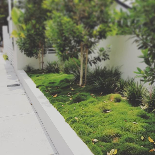 Luscious and Zoysia Grass #seedlandscapedesign #simpledesign #newfarmgarden