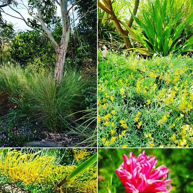 A native garden for local wildlife. Food, shelter and water, all the ingredients for a sustainable  sanctuary.  #seedlandscapedesign #nativeplanting #birdattractingplants