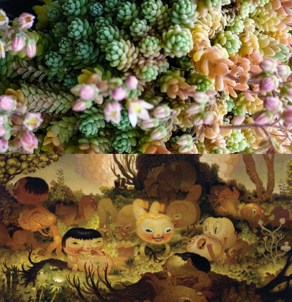 daveCooper_succulent.jpg
