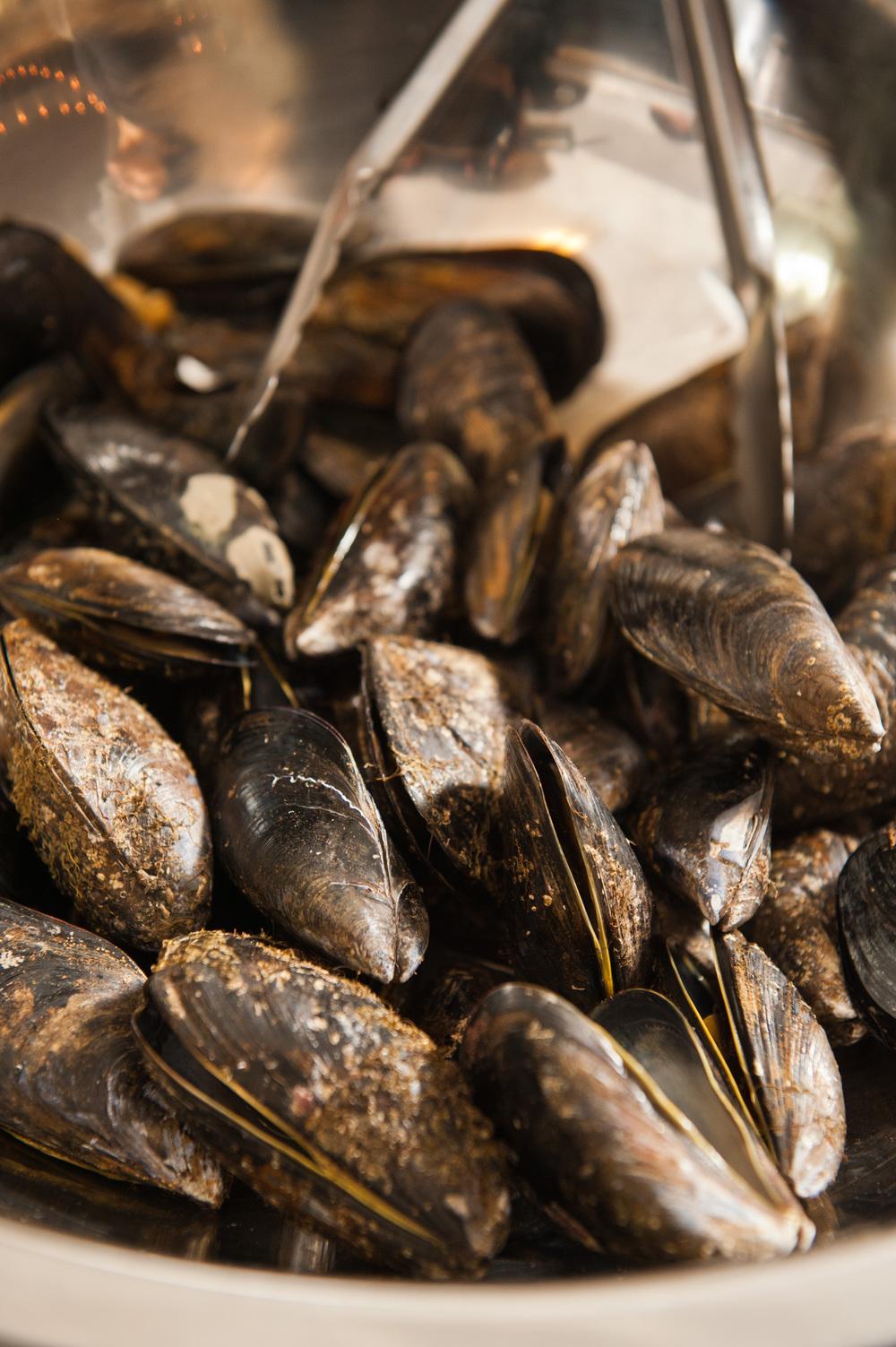Cove Mussels