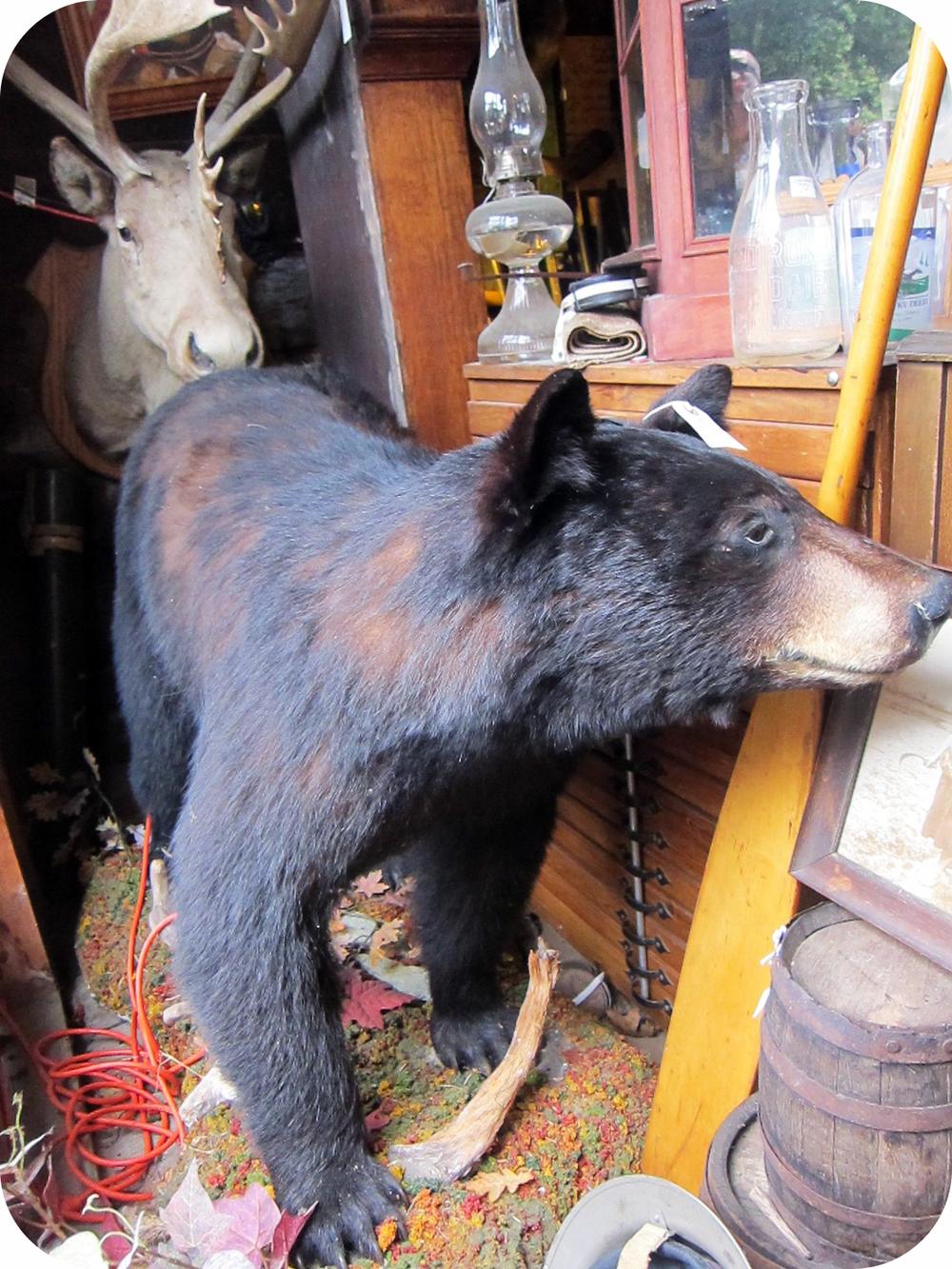 bear moose.jpg