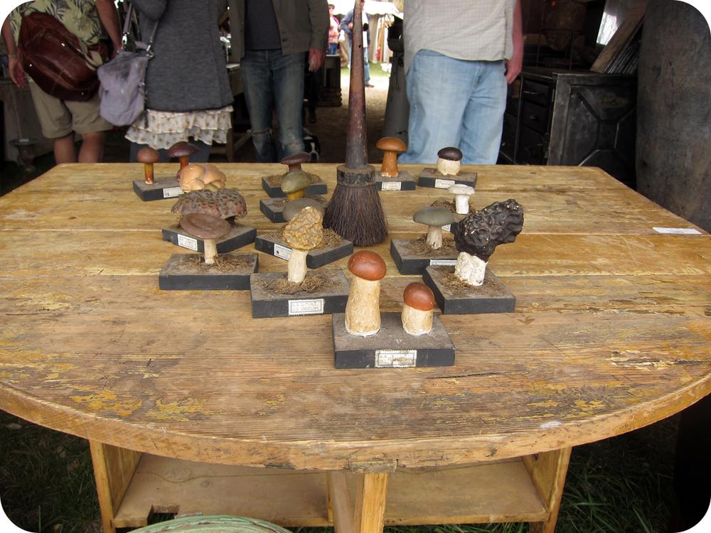 mushroom specimens.jpg