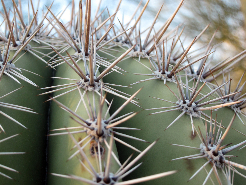Tucson's natural texture, a cacti's spikes! Sharp!!