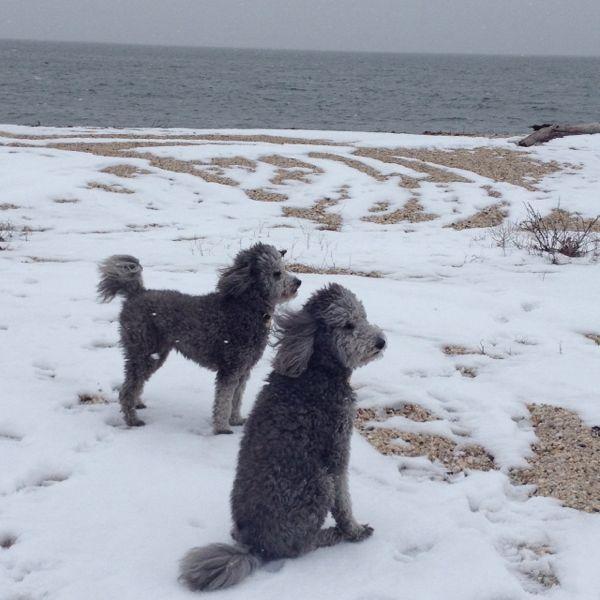 the pups enjoying snow on the beach by  Lilian Haidar