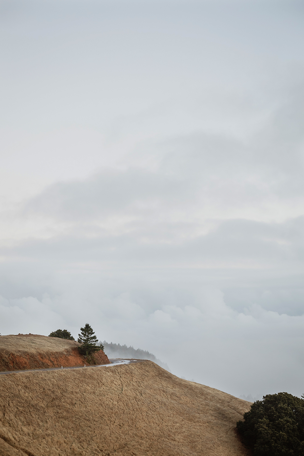engagement-session-in-mount-tam-25.jpg