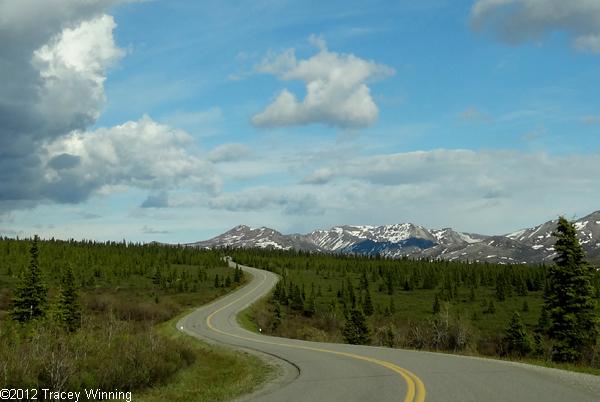 Park Road, Denali National Park, Alaska, Denali in early June.