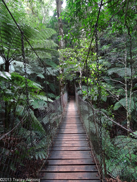 Suspension Bridge, Wishing Tree Track, Green Mountains, Gold Coast Hinterland