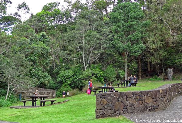 Binna Burra Picnic Area - Gold Coast