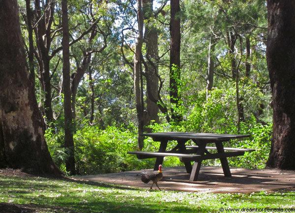 Gold Coast Picnic Spots - Mt Tamborine