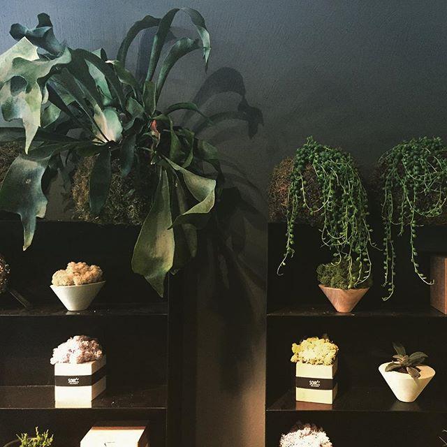 #plants #plantshop #kokedama