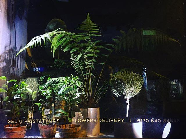 Jungles at night