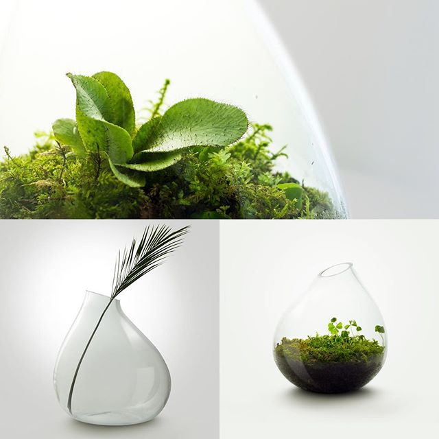 Stiklo indai - terariumai vėl mūsų parduotuvėje! Užeikite, galėsite išsirinkti sau patinkantį iš įvairių samanų ar augalų derinių!