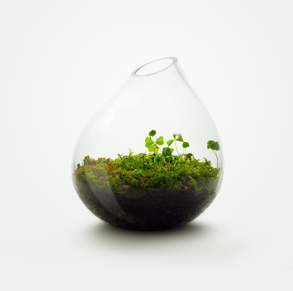 MIŠKO SAMANA - Įeinantys augalai: drėgnų miškų samanos.