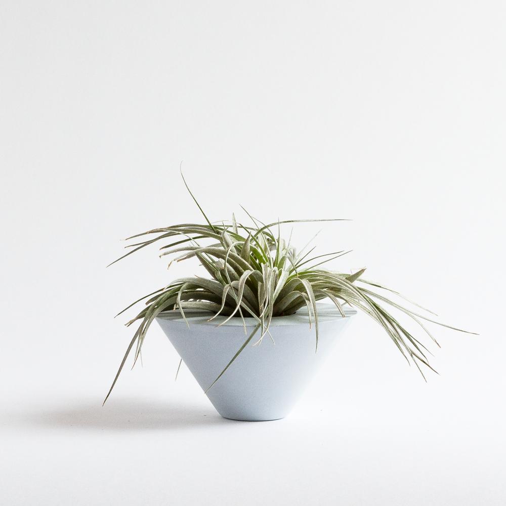 AIR PLANT CONE [BLUE] + TILLANDSIA   Sukurtas išskirtinai oriniams augalams, geometrinės formos indas pagyvins bet kokią erdvę.  Dydis: 6cm x 11,5cm  Kaina: