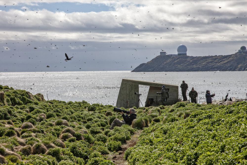 SJELDNE FUGLER: Hornøya er den siste biten av land i Europa før det store Barentshavet utbrer seg. Det kan være én av årsakene til at sjeldne fugler kommer innom, som flekkdverglerken i 2013.