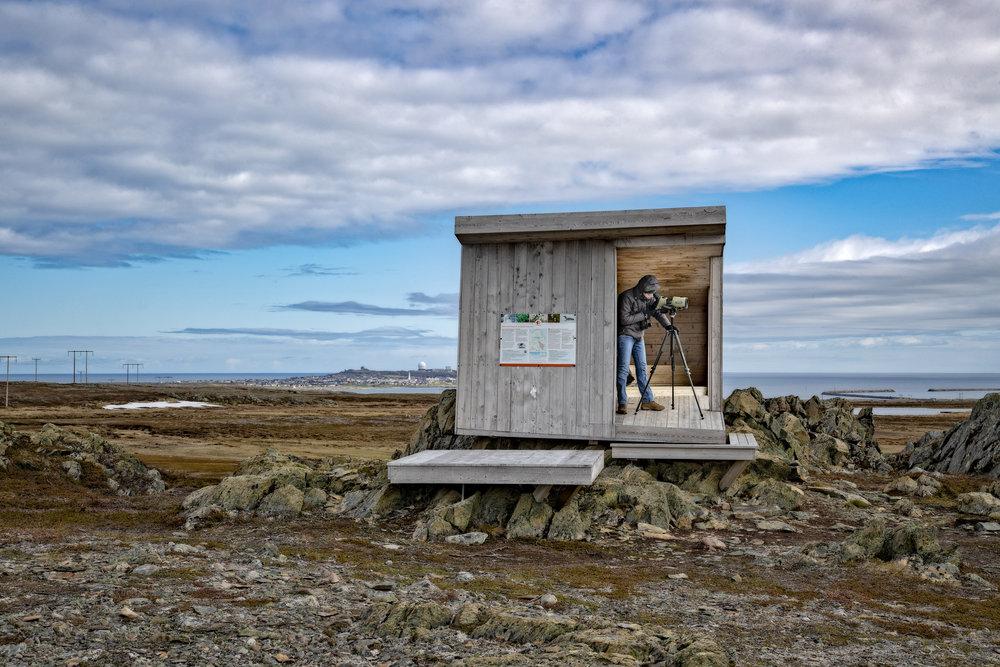 I SKJUL: Vil du være mer for deg selv? Varanger har mange fugleskjul tegnet av arkitektfirmaet Biotope. Dette er i Barvikmyran og Blodskytodden naturreservat, en kort kjøretur fra Vardø sentrum.