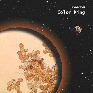 Treedom – May 24, 2013 – Red Light Café, Atlanta, GA