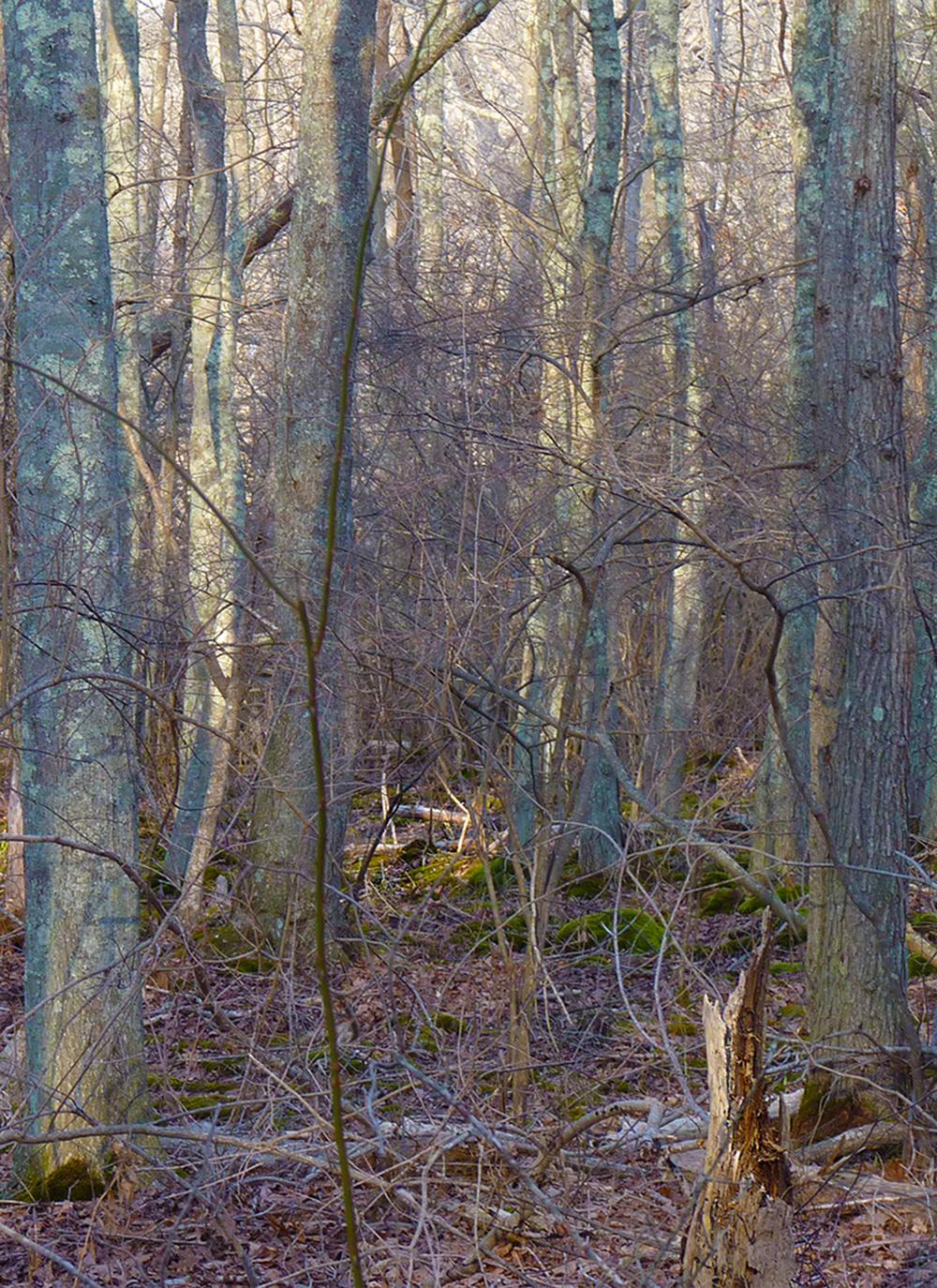 canocherwoods.jpg