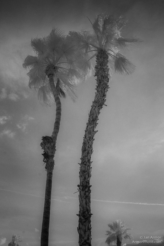 ARMOR ©2013-8937.jpg