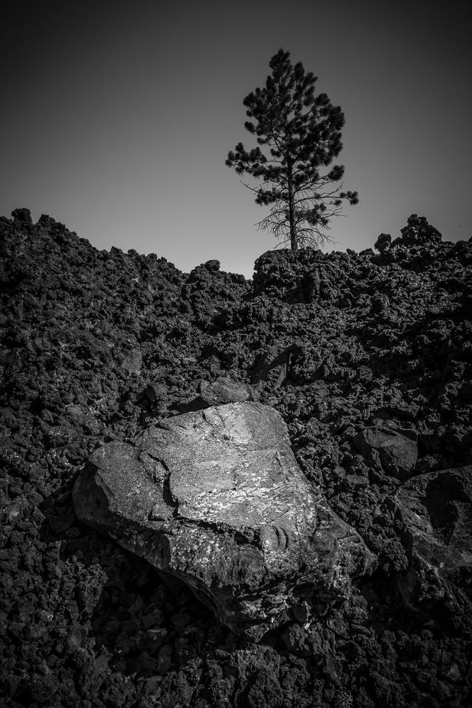 ARMOR ©2014-3549.jpg