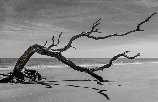 """Driftwood"" by Avis O'Neil"