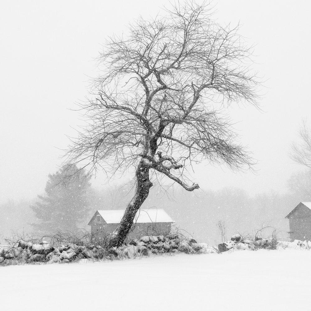 Leaning Tree - Wakefield