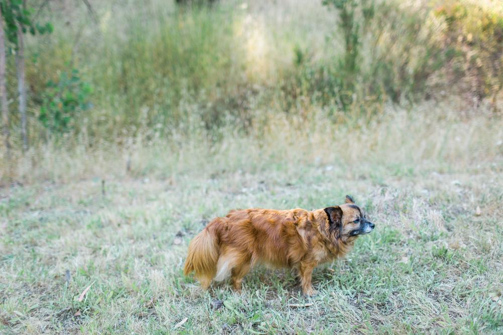 santa rosa dog photography