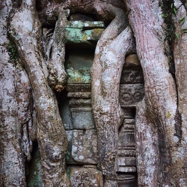 #taprohm #siemreap #cambodia