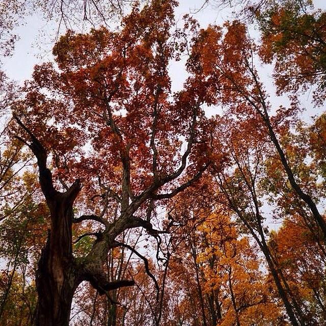 #fall #autumn #dscolor #welovedextermi