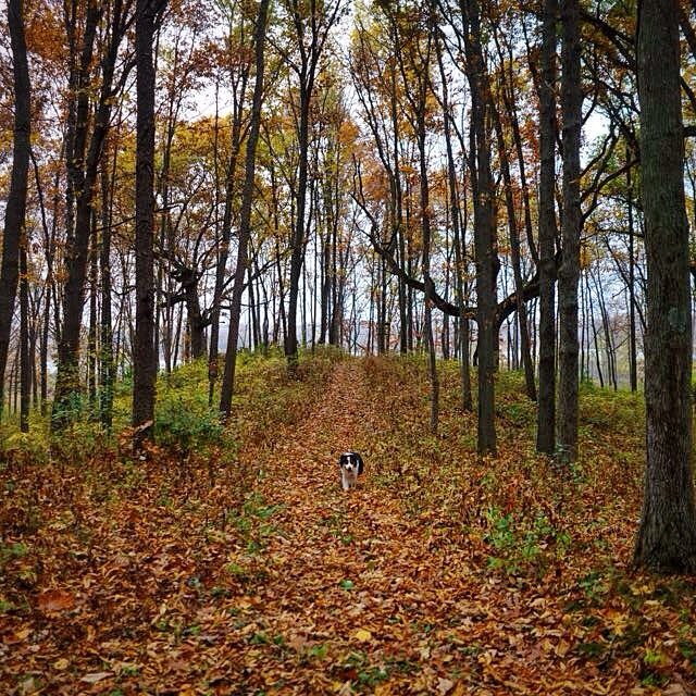 Archie, my best boy. I sure hope heaven looks something like this. I'm so glad we got to take you for one last run in the woods before you went.
