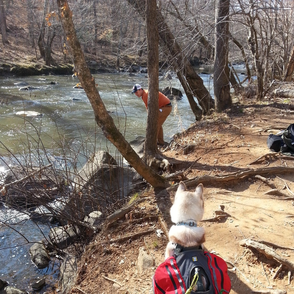 Surveying the banks at Buckquarter Creek Trail