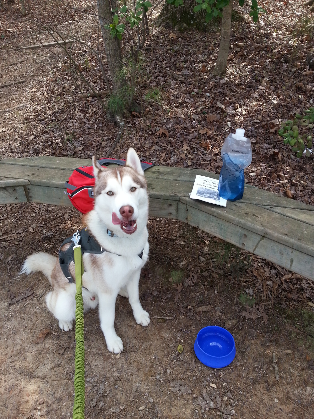 At the bench by the overlook: Ryder licking his chops after a quick drink of water
