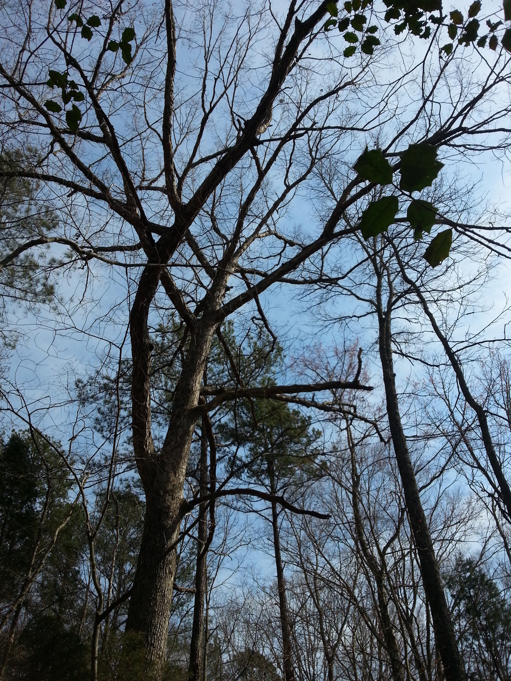 Don't forget to look up! This area is great for bird-watching, and it's not uncommon to find a bald eagle.