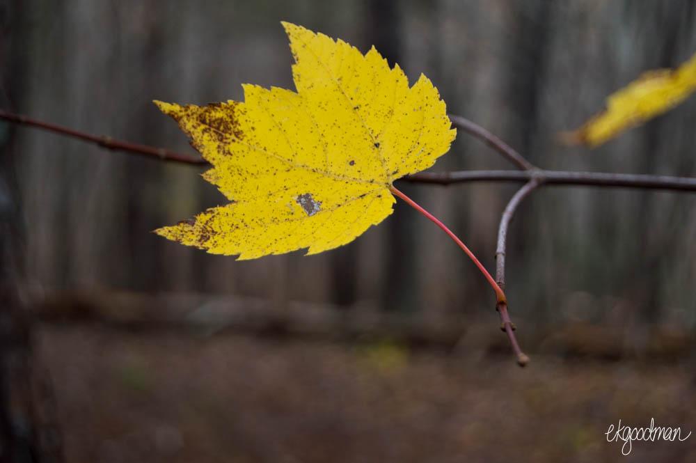 leaf-0477.JPG
