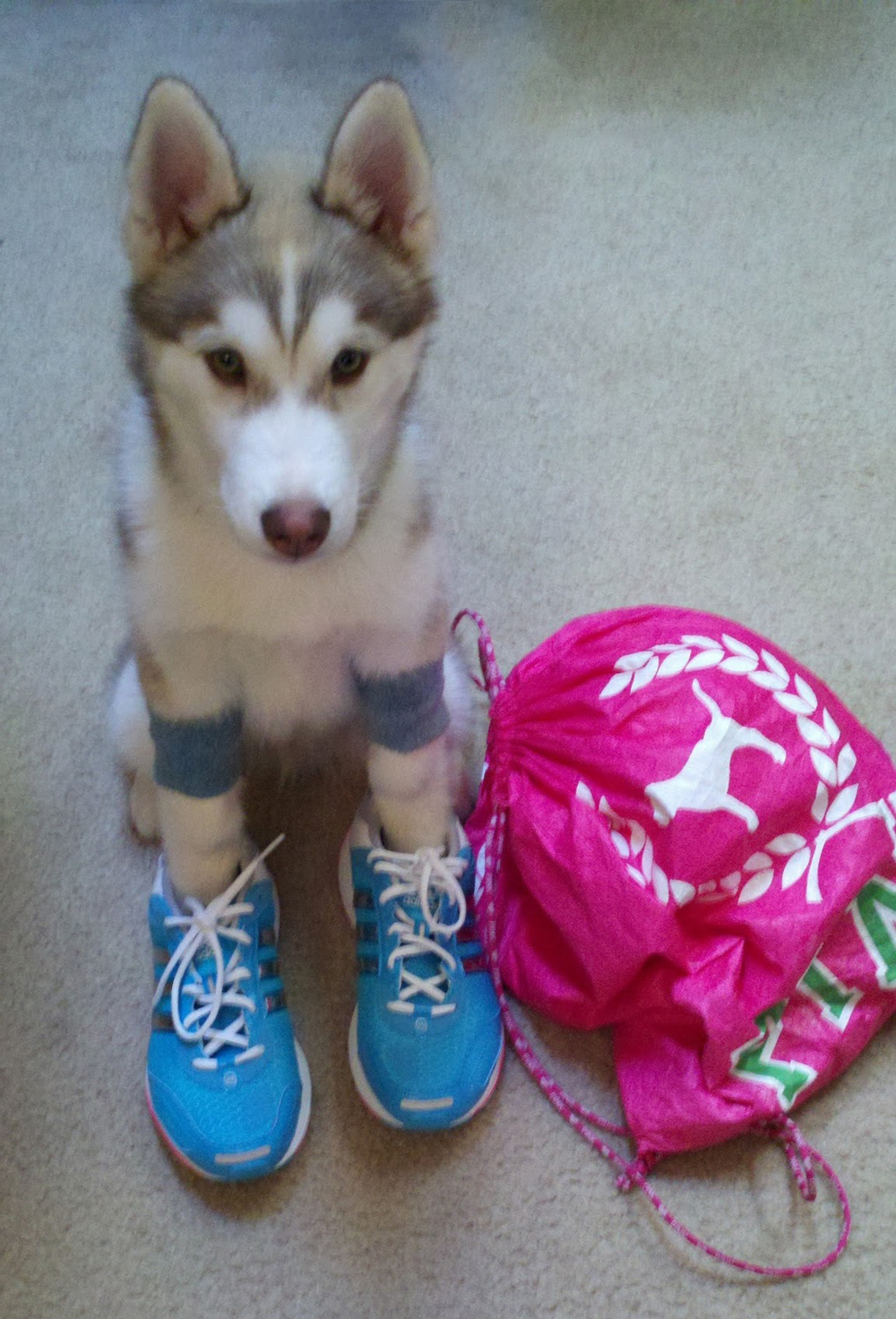 Because what's more adorable than a puppy dressed up as a run-fanatic? And Ryder was so cute at this age!