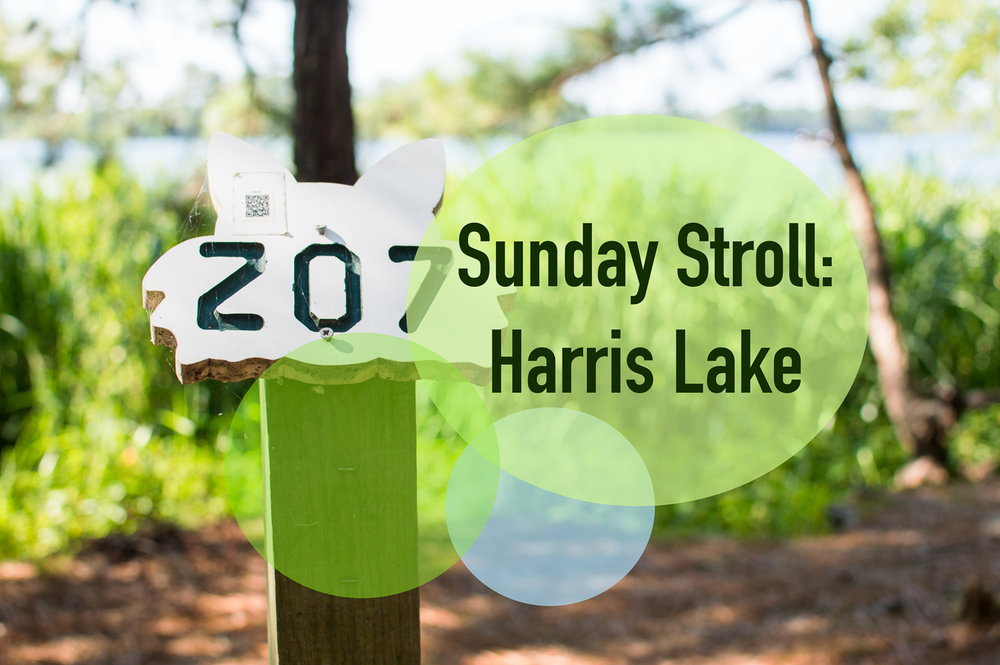 Sunday Stroll: Harris Lake
